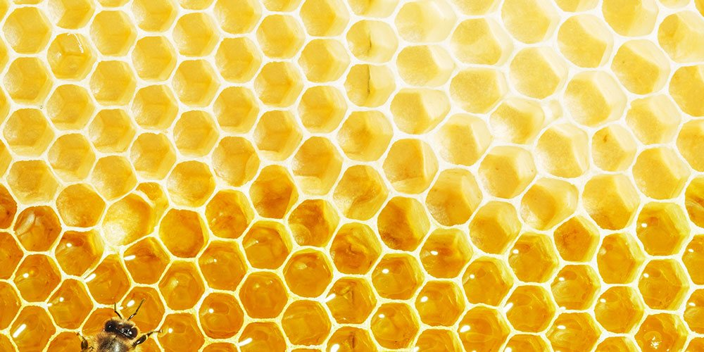 Honey Is The Best Food On The Planet